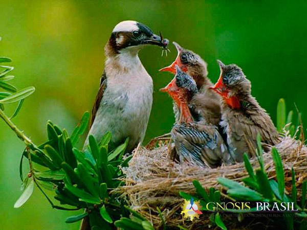 https://gnosisbrasil.com/storage/2015/04/a-natureza-mae-natureza.passaros.gnosis.brasil.jpg