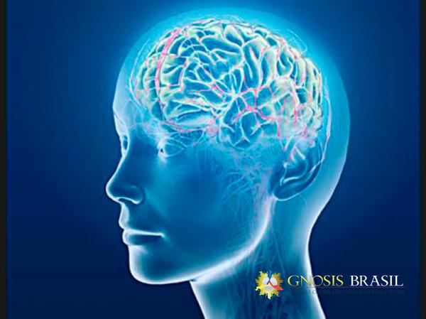 Os-três-cérebros.gnosis