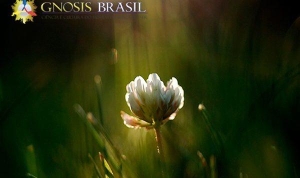 A-depressão-e-o-sacrifício-da-dor-Flor_gnosis