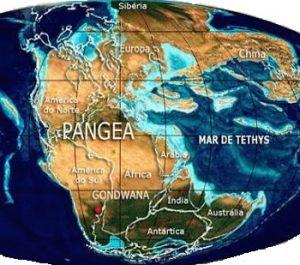 pangeia(1)