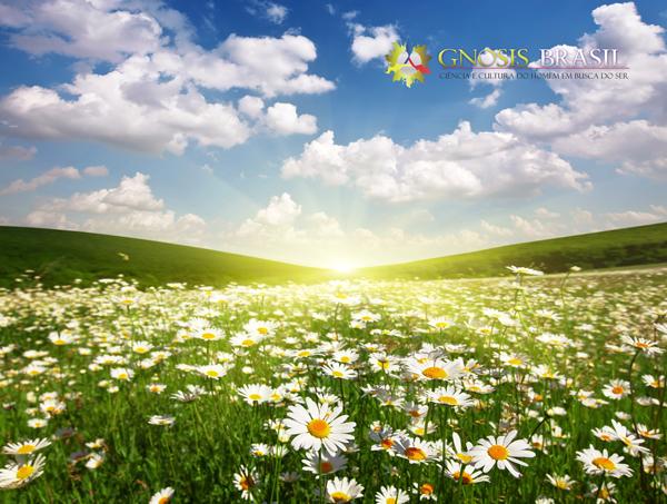 o-campo-flores-gnosis-brasil