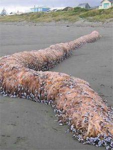 serpente marinha