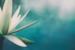 Yoga Esotérica | Gnosis Brasil